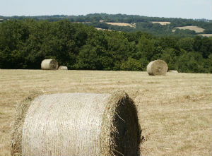 Meadow_Management_SprichHayBales_WMI