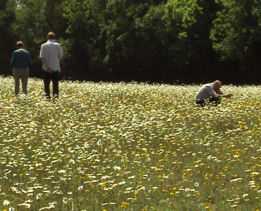 Meadow_People_Kew