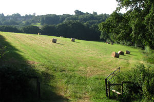 Triangle_Field_HayBales