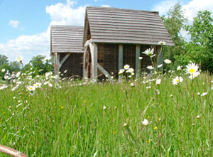 Millennium Seed Bank Meadow - Wakehurst Place